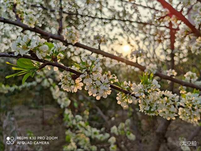 真是春光美啊